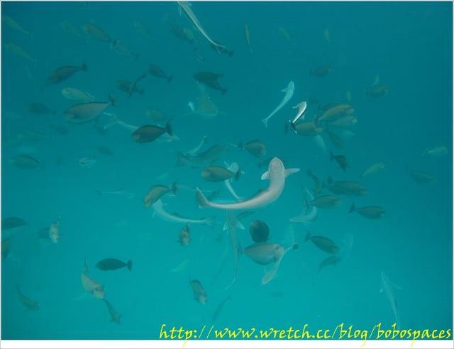 [旅遊-Palau]帛琉行day3-2☆鯊魚城 > 美人魚水道 > 干貝城 ☆