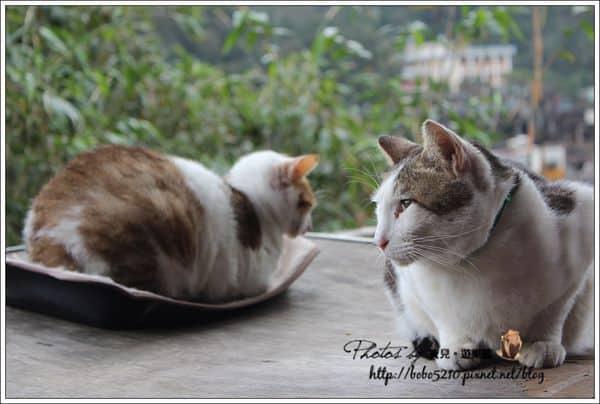【台北】新北市旅遊。哈囉,可愛的貓咪們!N訪貓村,貓咪樂園–猴硐。
