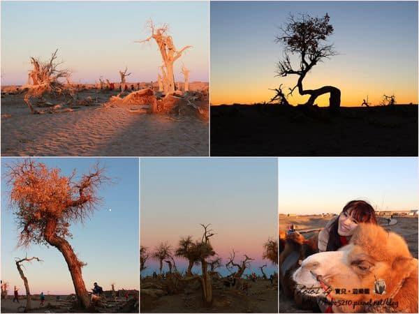 【中國-北京、內蒙古】Day3-2 初見額濟納(下)。怪樹林,看盡千姿百態的枯倒胡楊,感受怪木嶙峋的千年蒼涼