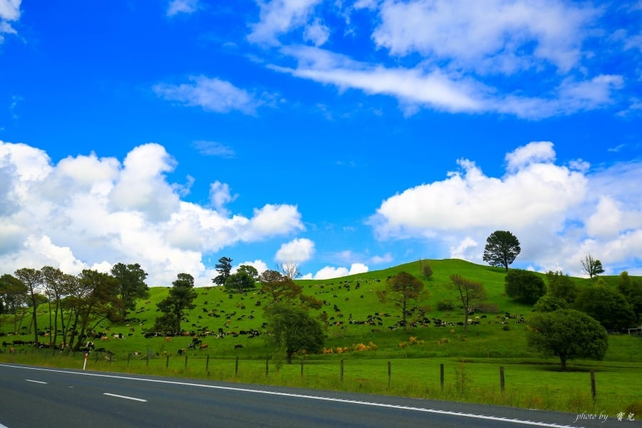 【紐西蘭租車推薦】北島十五天旅行。租車比價 x Omega租車價格 x 加油方式 x 右駕注意事項 x 延遲還車經驗。
