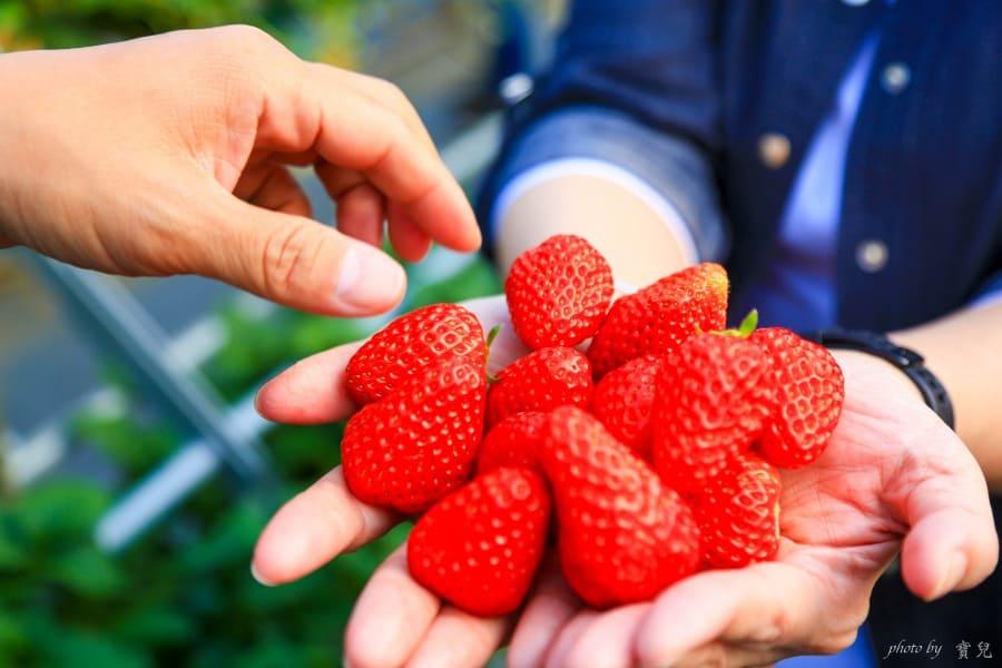 【日本北關東|栃木採草莓】日光草莓園 NIKKO Strawberry Park,現採現吃,香甜草莓吃到飽!